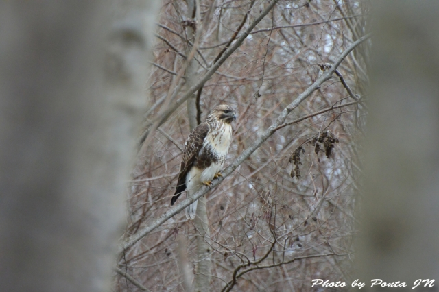 bird1512-0120.jpg