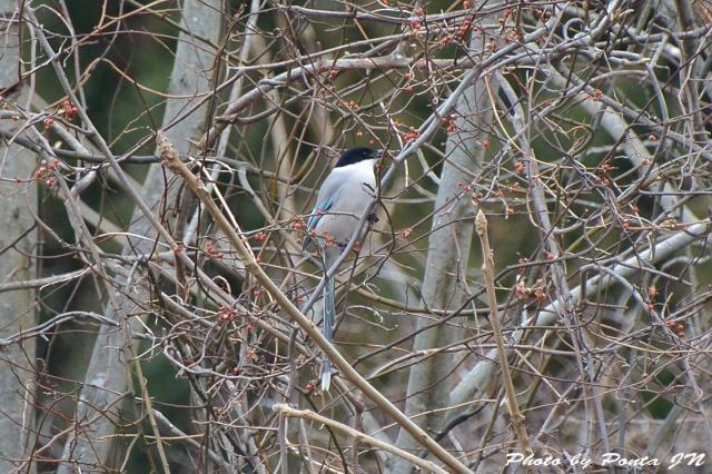 bird1512-0122.jpg
