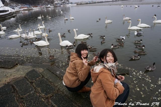 swan160214-0020.jpg