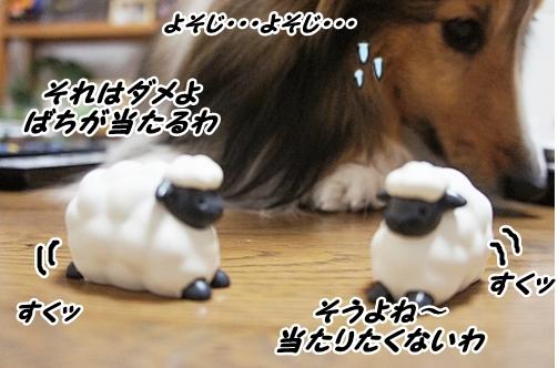 ひつじ11
