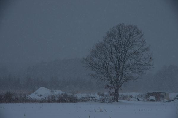 雪しんしん1本木