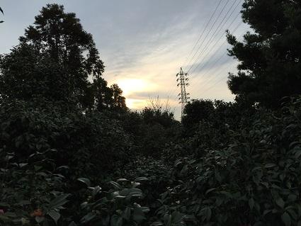 猫と畑の写真