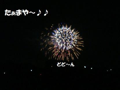 DSC06365 - コピー