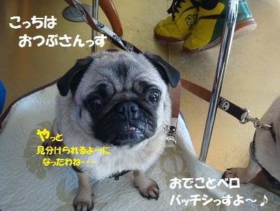 201201豊州1