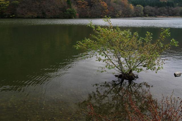 大山 大野池