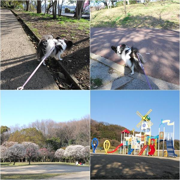 公園を散歩