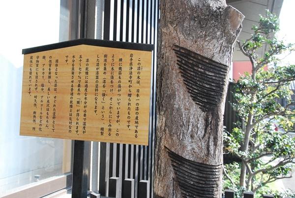 漆の木と説明書き