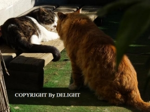 クルミととっちゃん猫