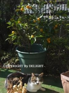 金柑ととっちゃん猫