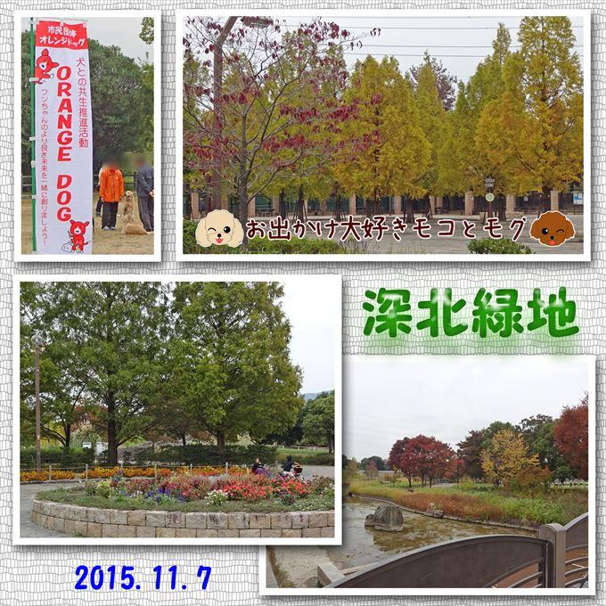 220_20160117141402c80.jpg