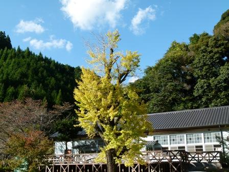 ichiyou1028.jpg
