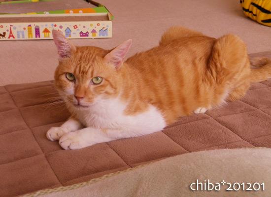 chiba16-01-09.jpg