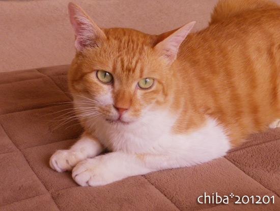 chiba16-01-10.jpg