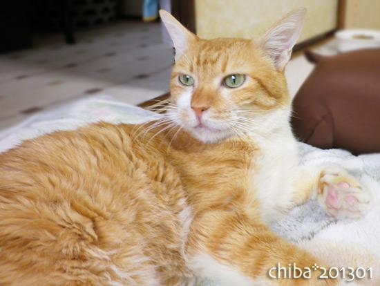 chiba16-01-17.jpg