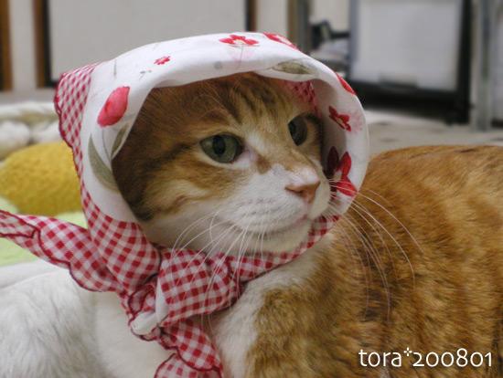 tora16-01-09.jpg