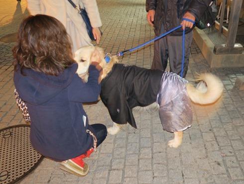 13)京都では犬も和服