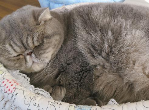 2)寝てるときはガッツポーズ