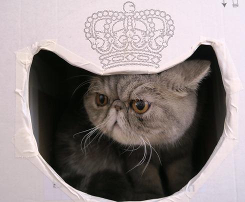 12)やっぱり王女だった