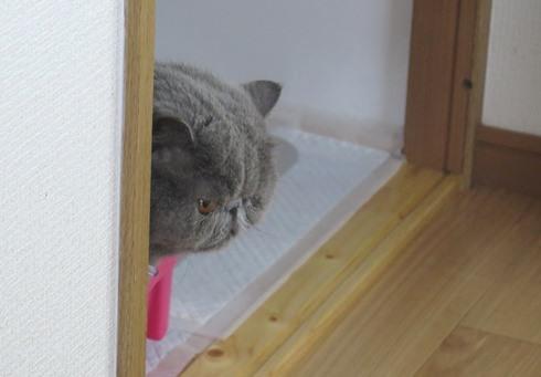 2)おやおや?おマルちゃん?
