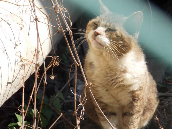 野良猫2+030_convert_20160228231623