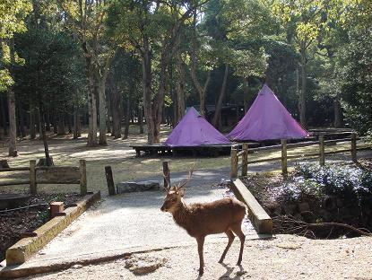 宮島包ヶ浦自然公園キャンプ場12