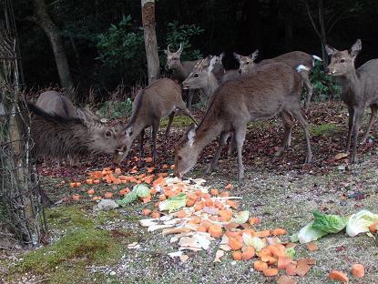 包ヶ浦自然公園管理サンター付近6