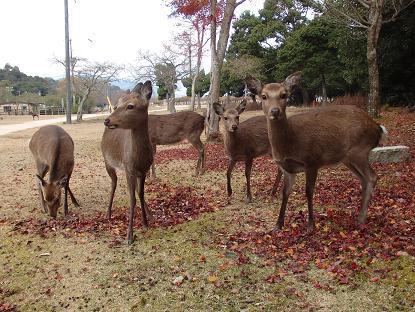 包ヶ浦自然公園管理サンター付近7