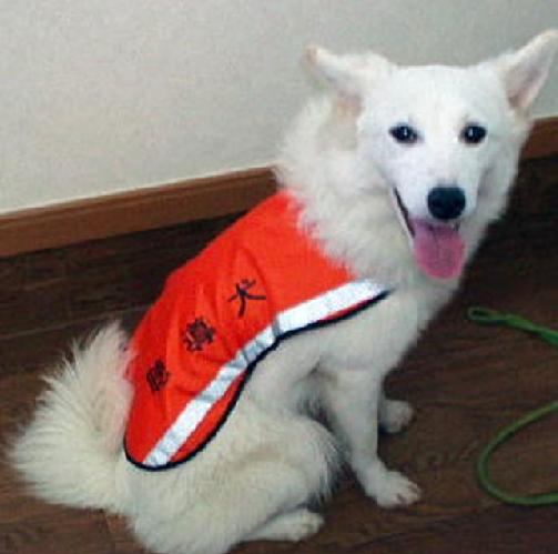 聴導犬ブランカ1