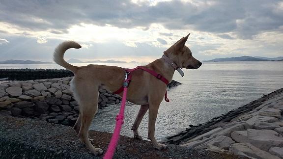 浜辺の散歩中、黄昏マリリン1