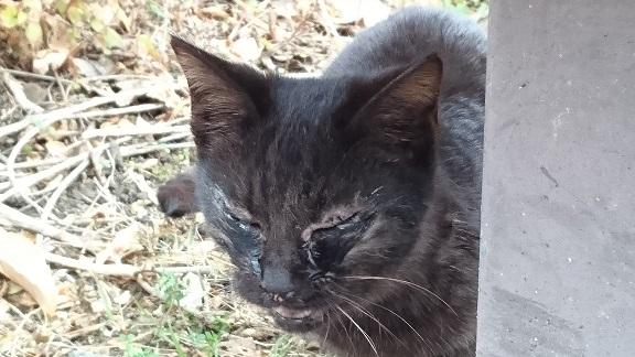 黒子猫の写真1