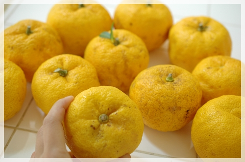 大きな柚子が沢山
