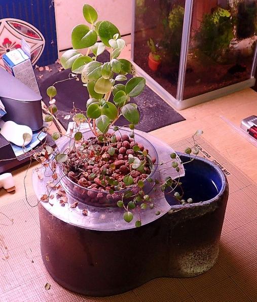 観葉植物トレイ2016-01-13 (1)