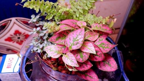 観葉植物トレイ2016-01-13 (11)