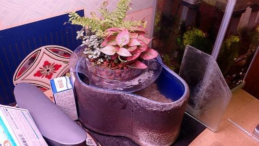 観葉植物トレイ2016-01-13 (9)