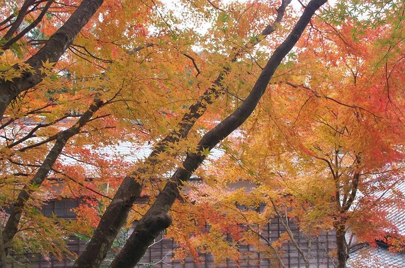 秋深し 三