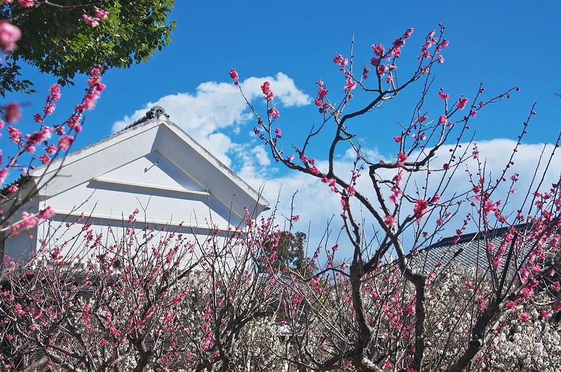 梅の咲く頃 二