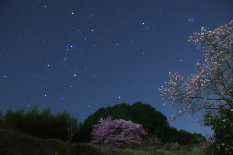 春近し、星降る夜に