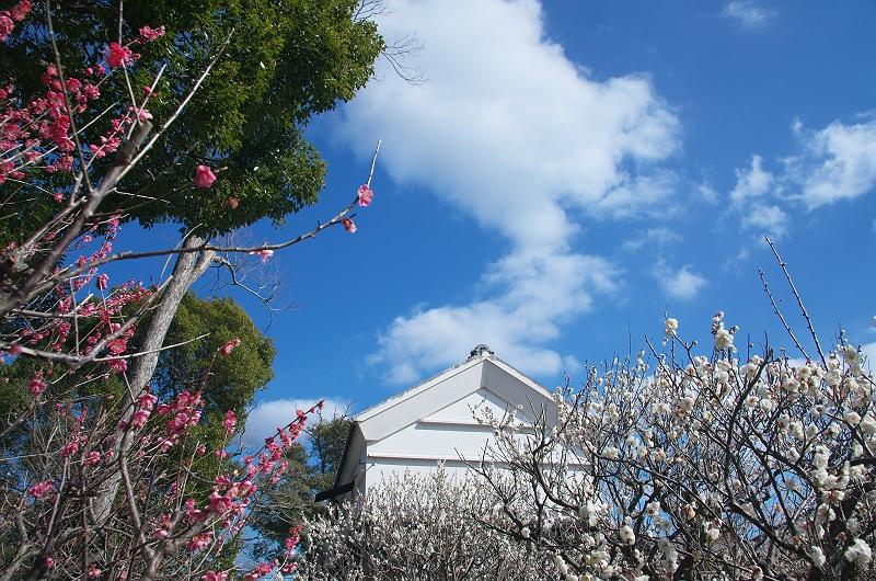 梅が咲く季節