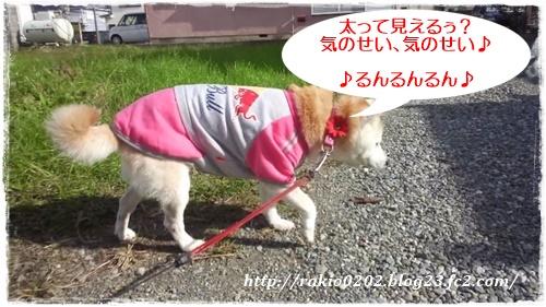 ナナらき散歩3☆☆