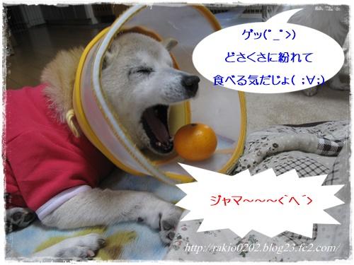 ななみかん4