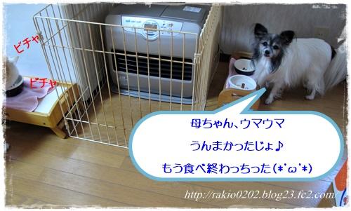 ナナらきご飯8