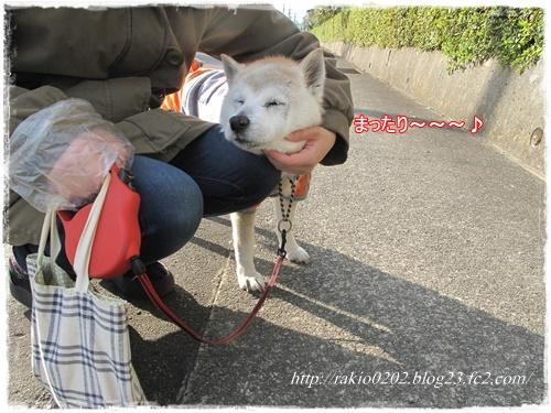 ナナらき散歩☆