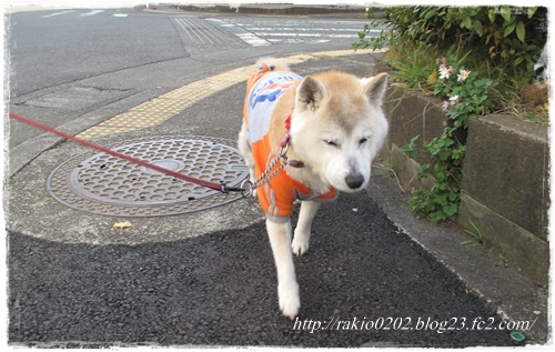 ナナらき散歩3