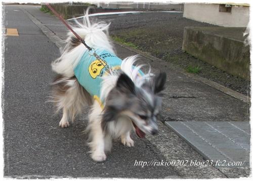 ナナらき散歩5