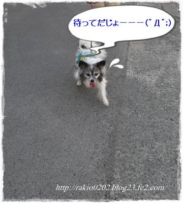 ナナらき散歩6