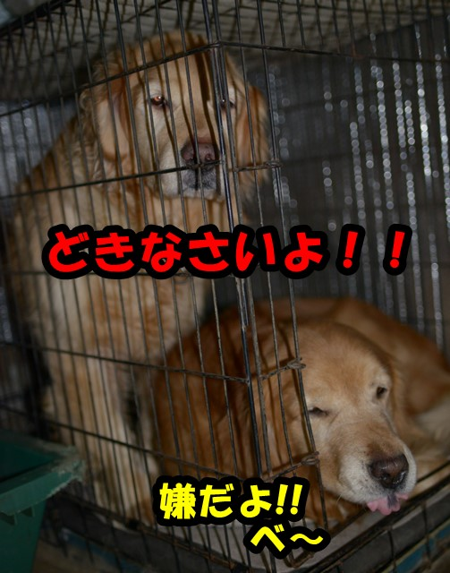 DSC_8850.jpg