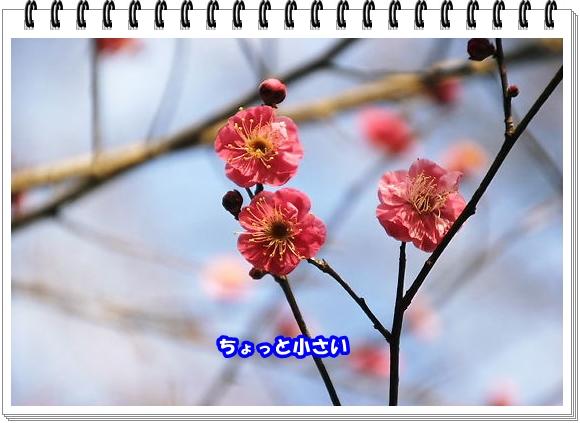 2480ブログNo5