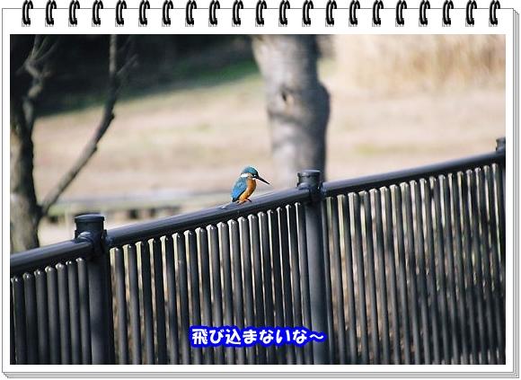 2481ブログNo4