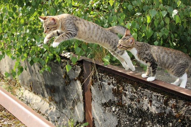 cat-912291_640.jpg