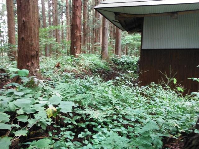 薬師岳(信濃町) (17)